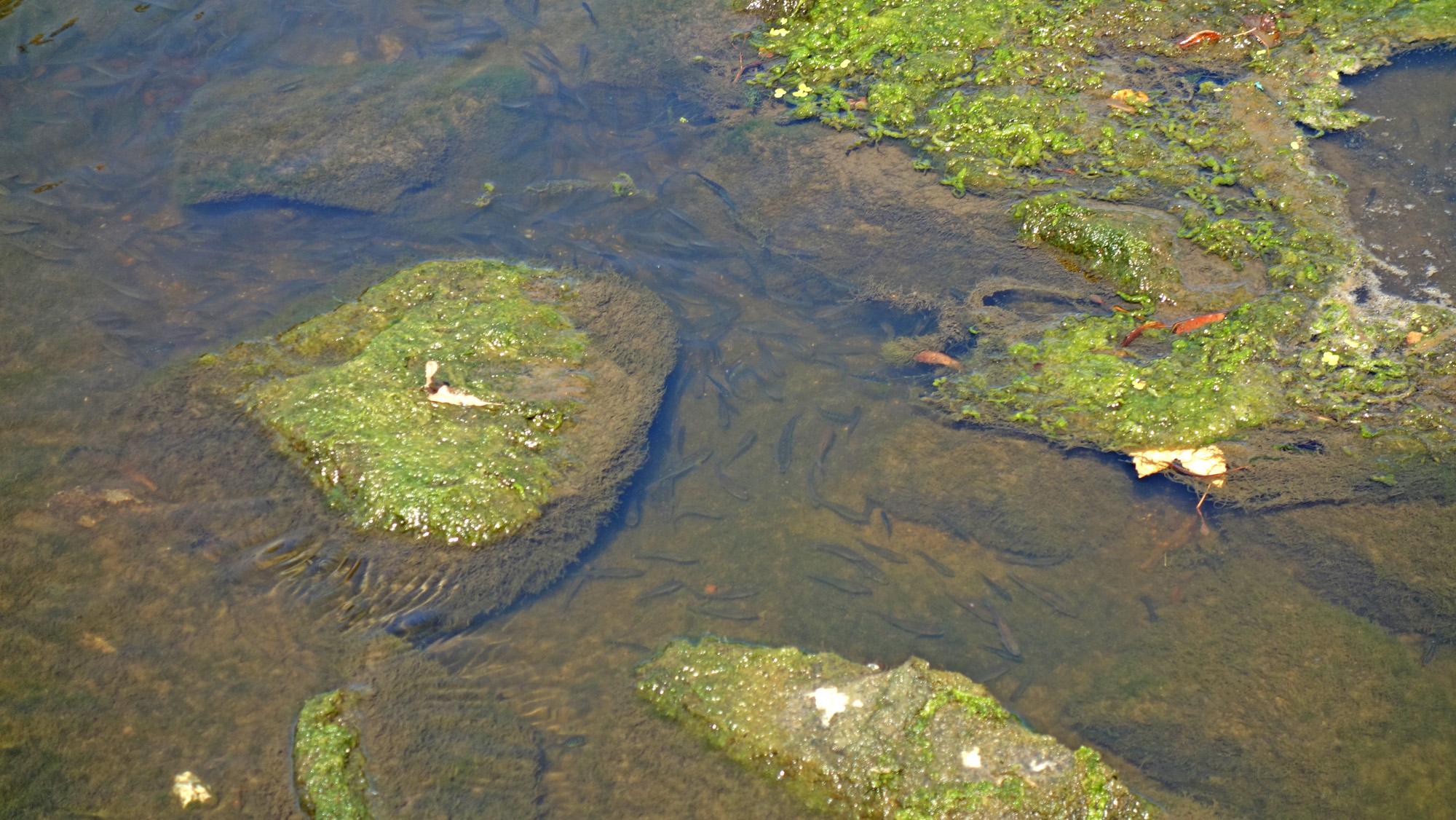 Fische am Ufer