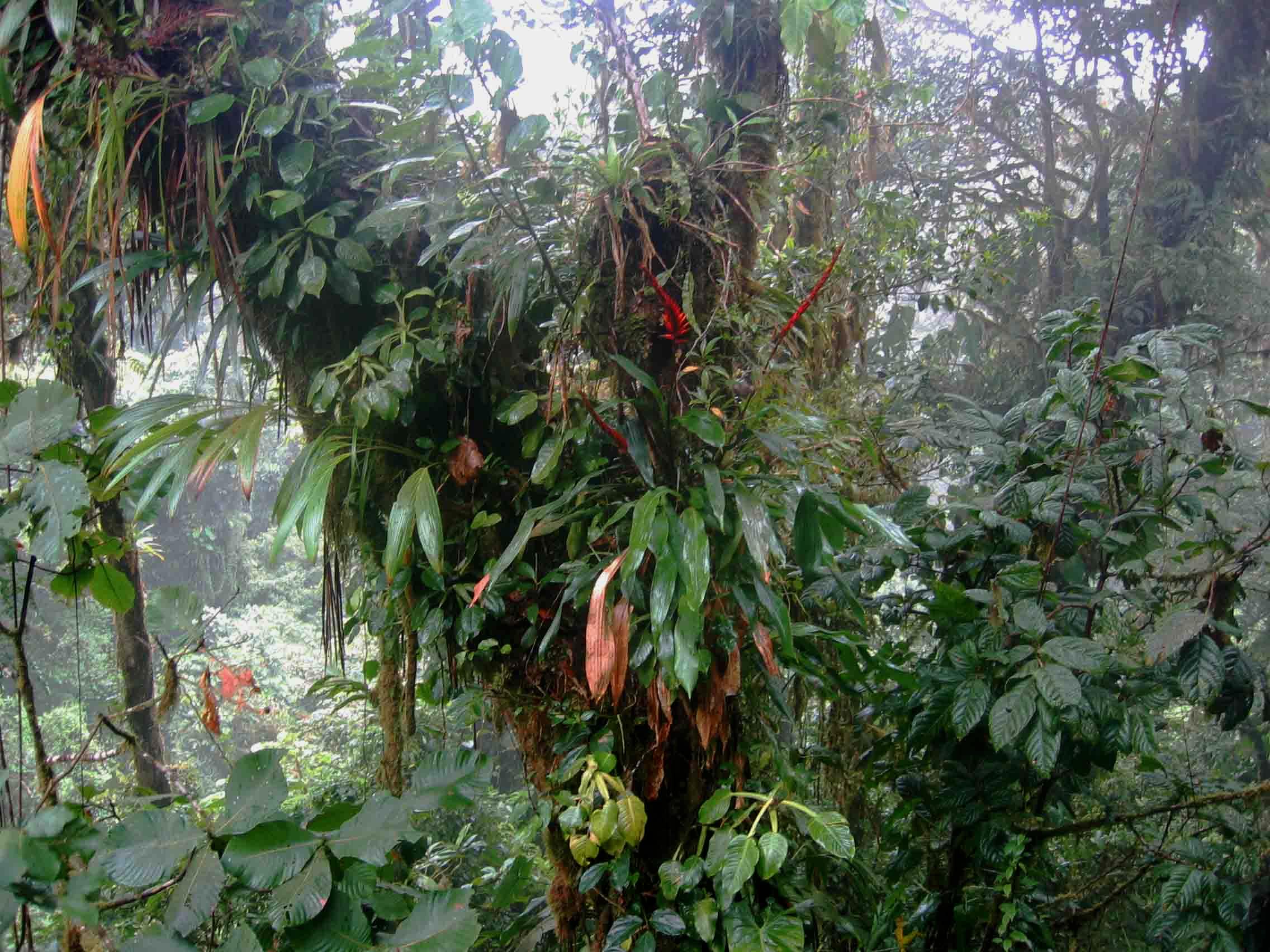 Primärer Regenwald in Costa Rica
