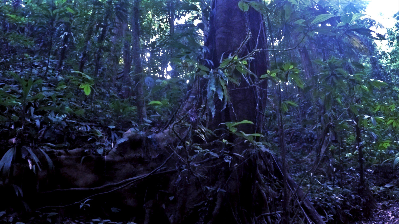 Der Dschungel erwacht