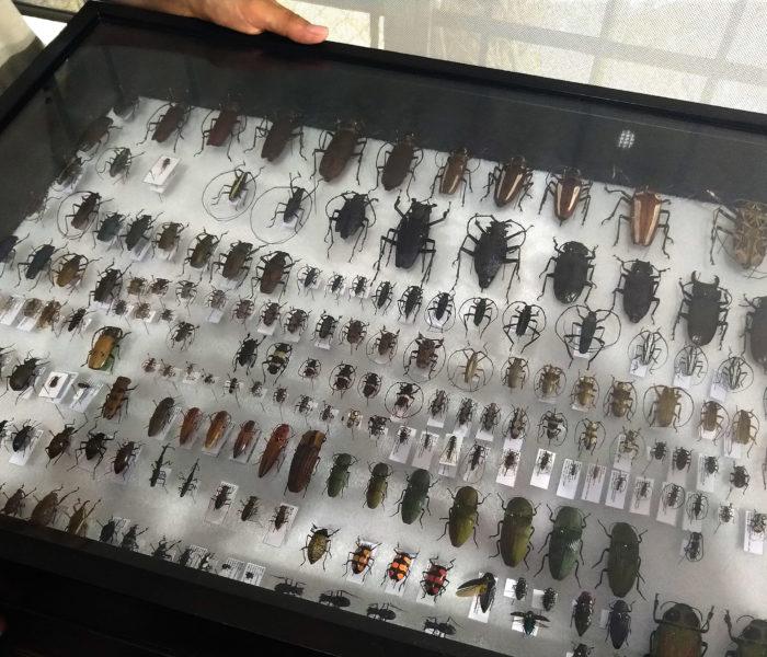 10 Fragen an die Insektenforscher