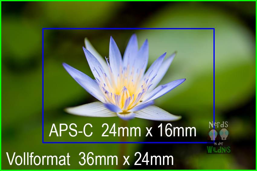 Vollformatsensor vs APS-C Sensor (Foto: Merlin Schönfisch)