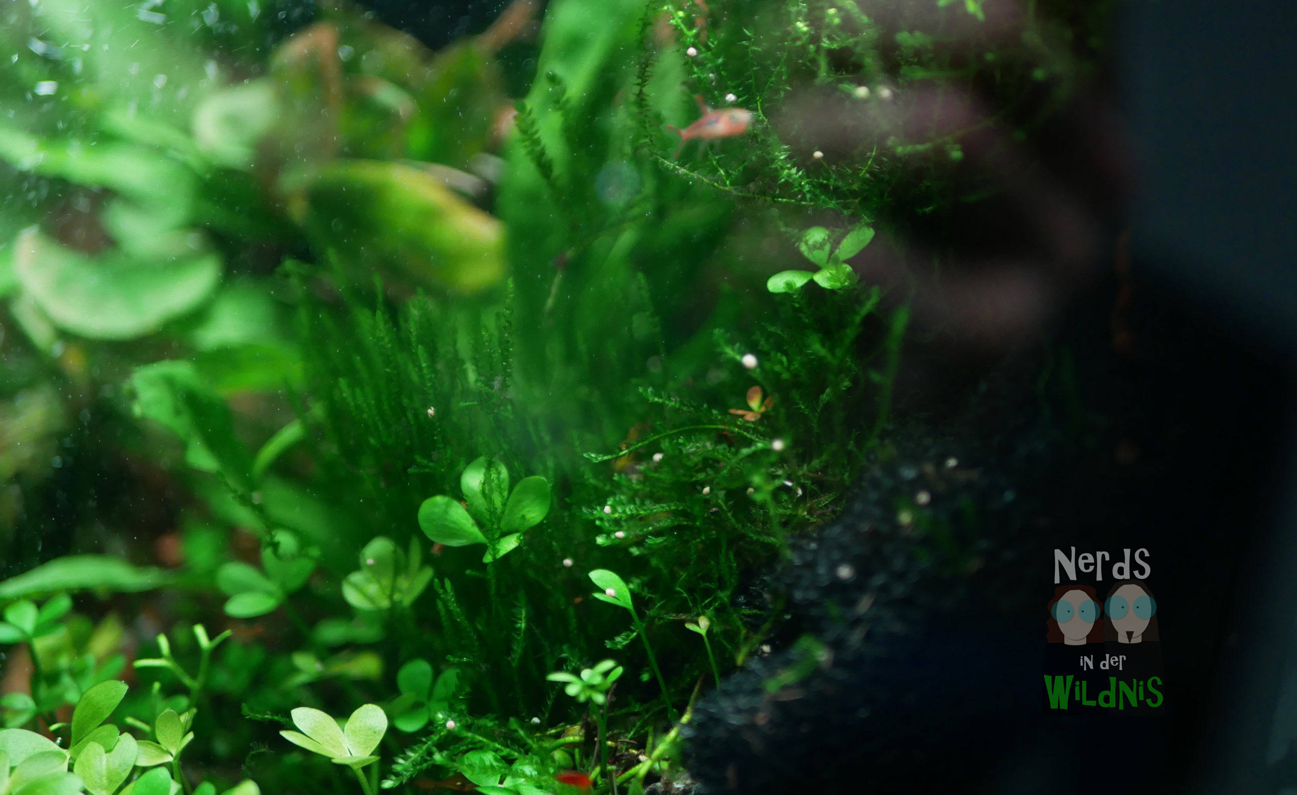 Aquarium-Rückwand